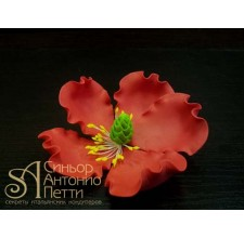 Цветы из мастики - Цветок мака, Красный (11924*D/p)