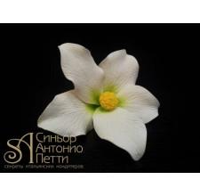 Цветы из мастики - Цветок лилии, Белый (11932*G/p)